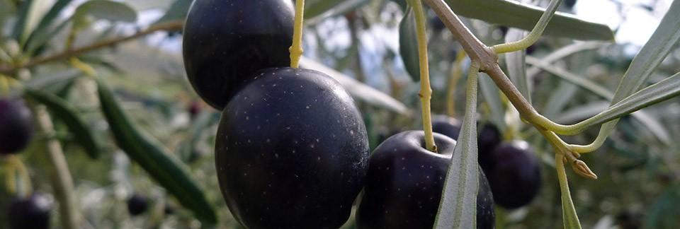 olijfolie-categorie